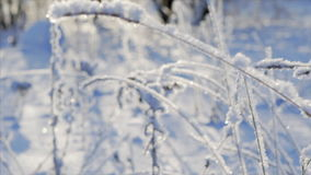 Grass under snow. Follow focus from grass to background slow motion stock footage