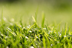 Grass under summer sun Stock Photo