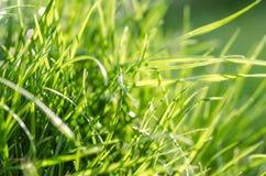 Grass under summer sun Stock Images