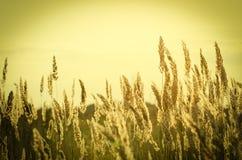 Grass under summer sunset Stock Image