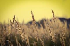 Grass under summer sunset Stock Photography