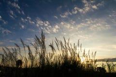 Grass Under Sun Rises Stock Image