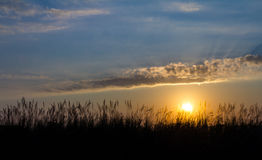 Grass under sun rises Royalty Free Stock Photography