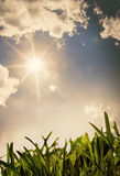 Grass under the sun Royalty Free Stock Photography
