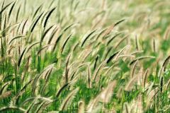 Grass under sunlight Stock Photo