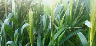 Grass under the sunlihght royalty free stock photos