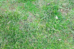 Grass Underground Nature Surface Stock Images