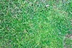 Grass Underground Nature Royalty Free Stock Photo