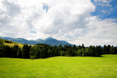 Grass valley in forest Royalty Free Stock Images