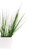 Grass in vase Stock Photography