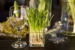 Grass in vase glasses and glass on table. Stock Photos