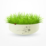 Grass in a vase Stock Photography