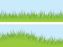Grass vector. Green grass both straight and curved Stock Image