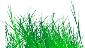 Grass vector Stock Photo