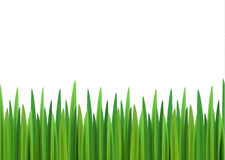 Grass vector background with empty space Royalty Free Stock Image