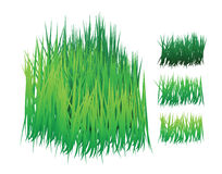 Grass vector with different shades Stock Image