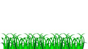 Grass, vector Stock Photography