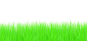 Grass, vector Royalty Free Stock Photo