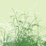 Grass vector silhouette Stock Photos