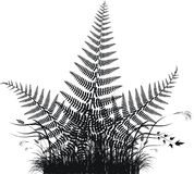 Grass vector silhouette with fern leaves. Vector illustration Stock Images