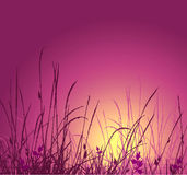 Grass vector silhouette and sunset. Ideally for your use in design Royalty Free Stock Photos