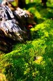 Grass Vegetation on the Tree Bark Stock Image