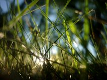 Grass, Vegetation, Water, Close Up stock photography