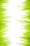 Grass007 vert Images stock