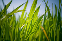 Grass View Royalty Free Stock Image