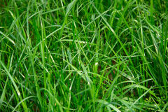 Grass view with shallow depth of field Royalty Free Stock Photos