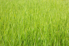 Grass view with shallow depth of field Royalty Free Stock Photography