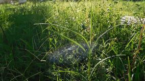 Grass view 2 stock video footage