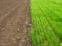 Grass Vs. Land. Fresh Green Grass vs. The Land Stock Images