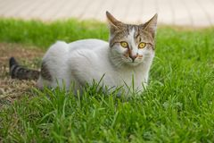 The grass is waiting on the cat. The grass is waiting on the cat royalty free stock photos