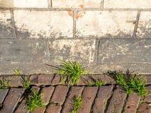 Grass on walk way Royalty Free Stock Photo