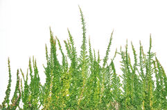 Grass on the wall. Royalty Free Stock Photos