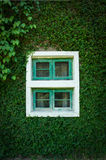 Grass wall with old window. Royalty Free Stock Photo
