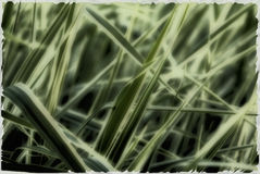 Grass wallpaper royalty free stock image
