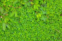 Grass wallpaper Stock Images