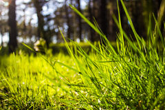 Grass. Wallpaper macro photo of the grass Stock Photography