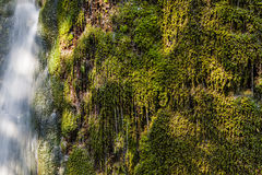 Grass wallpaper waterfall drops Stock Images