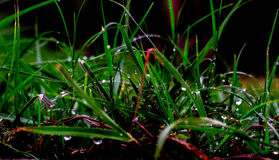 Grass. This was an attempt to think out of the box Royalty Free Stock Images