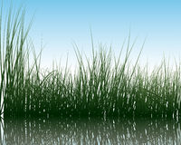 Grass on water Royalty Free Stock Images