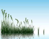 Grass on water Royalty Free Stock Image