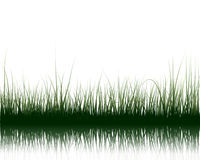 Grass on water Stock Photography