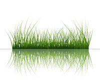 Grass on water Stock Photos