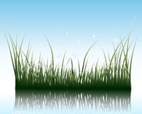 Grass on water Royalty Free Stock Photo