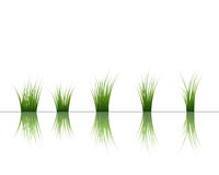 Grass on water Stock Images