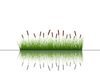 Grass on water Royalty Free Stock Photos