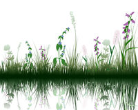 Grass on water. Vector grass silhouettes background with reflection in water. All objects are separated Royalty Free Stock Image